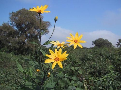 土手に咲いていた花3