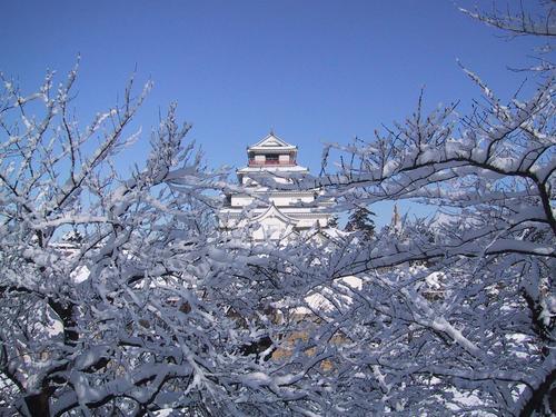 桜の枝にいっぱいの雪が