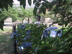 鶴ヶ城の紫陽花