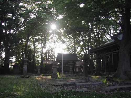 諏訪神社境内森の中です。