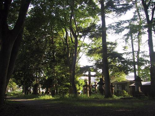 諏訪神社の森2