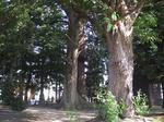 境内の樹木2