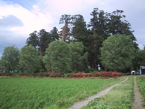 下荒井・熊野神社の森