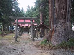 市天然記念物「熊野神社三幹のスギ」