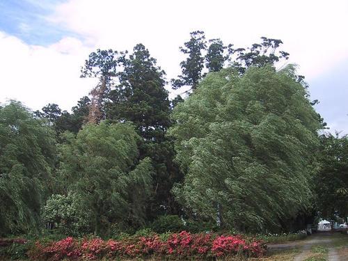 風に揺れる木々
