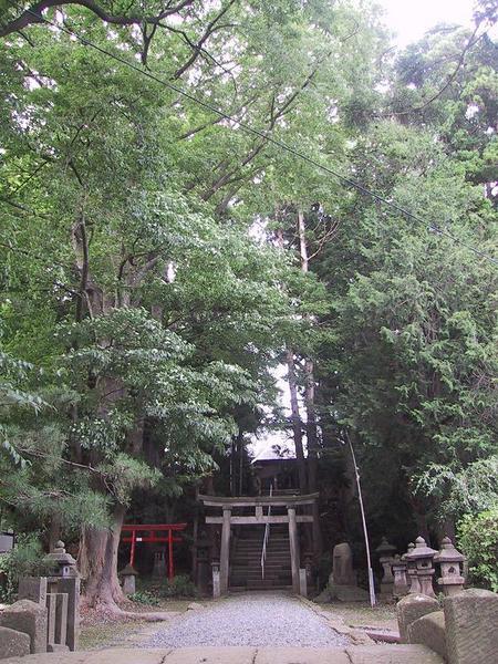 八幡神社の森