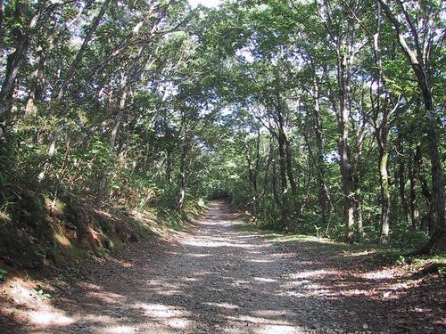 キャンプ場に続く山道