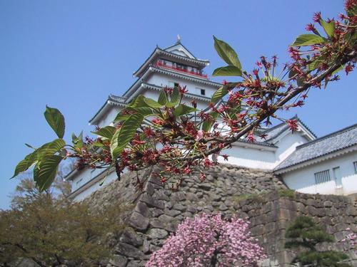 葉桜と天守閣